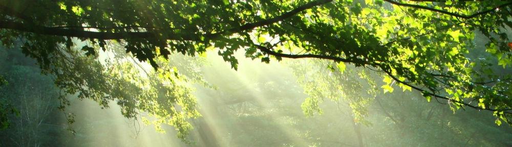 Sur le chemin de lumière