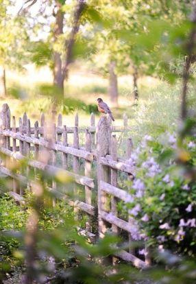 oiseau sur la barrière